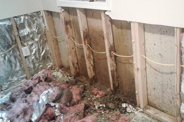 Mold Remediation Armagh, Towson